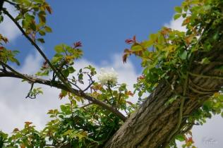 La belleza de la blanca flor recortada contra el cielo