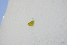 Una gran pared o una pequeña mariposa