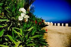 Flores en la costa mediterránea