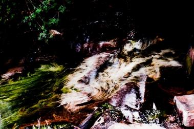 Plantas acuáticas bamboleándose con el ritmillo de un riachuelo